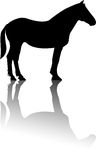 Horse standing silhouette reflection vector Stock Photo