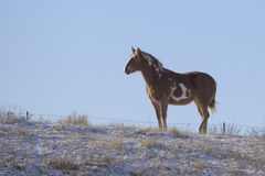 A Horse standing in a snow covered field Royalty Free Stock Images