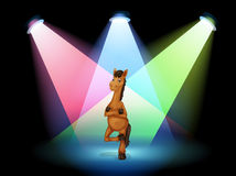 A horse standing at the stage Royalty Free Stock Images