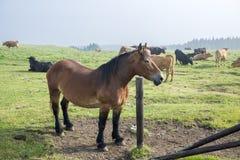 Horse standing still Stock Photos