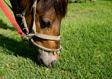 Horse. Standing in a summer meadow Stock Photos