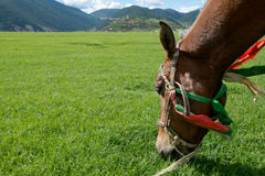 Horse. Standing in a summer meadow Royalty Free Stock Photography