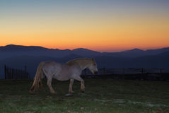 Horse standing under sunset. On the umbria apennines Stock Photo