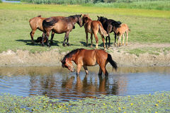 Horse standing in water Stock Photos