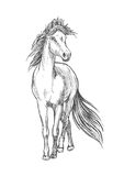 Horse standing with waving mane pencil sketch Stock Images