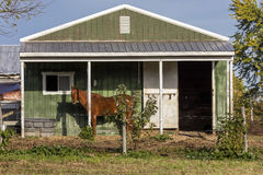 Horse stands in front of green barn, backroads of Virginia, October 26, 2016 Royalty Free Stock Image