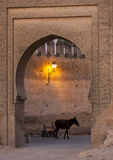 A horse stands inside one of the entrances into the Fez medina in Morocco. The medina is the oldest walled part of Fez and was originally founded as the Royalty Free Stock Photography