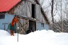 A horse son a snowy farm stock photo