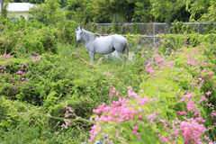 Horse stands in lush green field Royalty Free Stock Photo