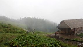 Horse stands near a wooden house on an old farm in the fog stock video