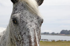 Horse Stare. A portrait of a horse showing its eyes and mane with a rural background royalty free stock photography