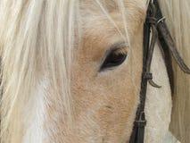 Horse - Stock Photos Royalty Free Stock Photos