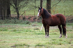 Horse stood in a field Stock Photo