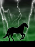 Horse in the storm Stock Image