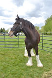 Horse and storm. A large Clydesdale horse stands in a fenced area as storm clouds pass royalty free stock photos