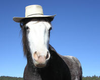 Horse with straw hat. Horse wearing a hat Royalty Free Stock Images