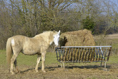Horse beside the straw manger Stock Photo