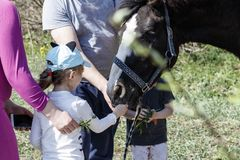 Horse on the street. the child feeds the horse. parents control the process. Carrot animal girl countryside outdoor daughter equine baby family fun pet ranch stock image