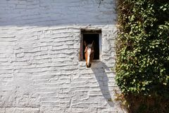The horse stuck his head out stock photography