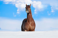Horse stuck in snow Stock Photos