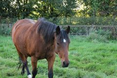 Horses Suffolk Autumn Royalty Free Stock Photography