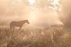 Horse sulhouette in foggy sunshine Stock Images