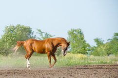 Horse in summer Stock Photos