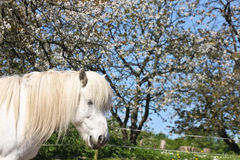 Horse in the summer Royalty Free Stock Image