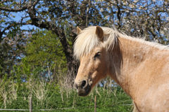 Horse in the summer Royalty Free Stock Images