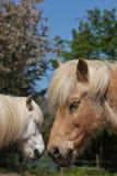 Horse in the summer Stock Photos
