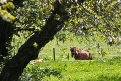 Horse in the summer Royalty Free Stock Photo