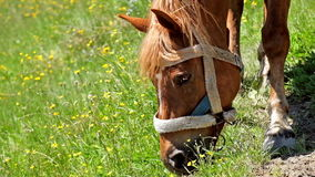 Horse on summer meadow. Amazing sunny day in mountains stock footage