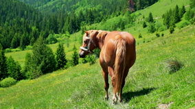 Horse on summer meadow. Amazing sunny day in mountains stock video