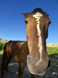 Horse on summer pasture. Summer close-up outdoor photo of horse on pasture Stock Images