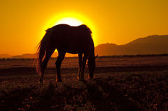 Horse and sun Stock Image