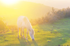 Horse with sun beams. Horse at sunset with sun beams royalty free stock photography
