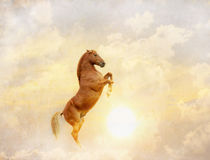 Horse and sun Royalty Free Stock Photography