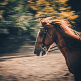 Horse sun bright whirls away. Royalty Free Stock Photo