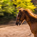 Horse sun bright whirls away. Stock Photography