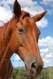 Horse in the Sun Teodoro. Stock Photos