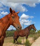 Horse in the Sun Teodoro. Stock Image