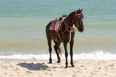The horse sunbathe on sand and the beach. The horse sunbathe on sand and the beach Stock Image