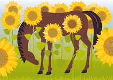 Horse in sunflowers Stock Photo