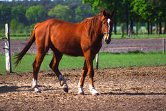 Horse in Sunlight Stock Images