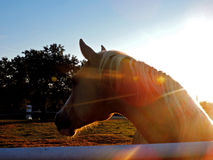 Horse in Sunlight. A photo of a horse on a farm Stock Photo