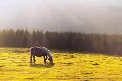Horse with sunrays Royalty Free Stock Photos