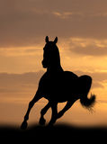 Horse in sunrise Royalty Free Stock Image
