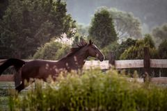 horse at sunrise in the meadow