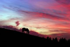 Horse and sunset. Silhouette of a grazing horse against a very dramatic sunset Royalty Free Stock Photography