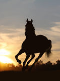 Horse in sunset. Horse silhouette in late sunset Royalty Free Stock Photography